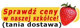 guzik-sprawdz-ceny2